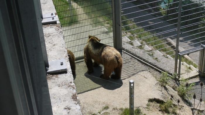 ベルン、熊公園