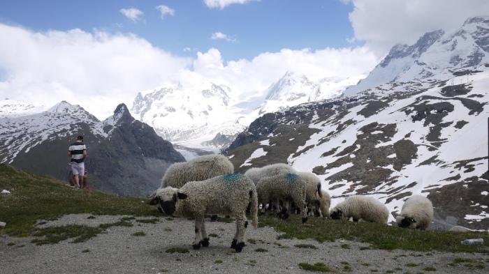 羊がいました
